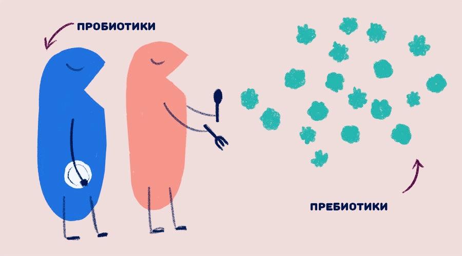 Пребиотики и пробиотики
