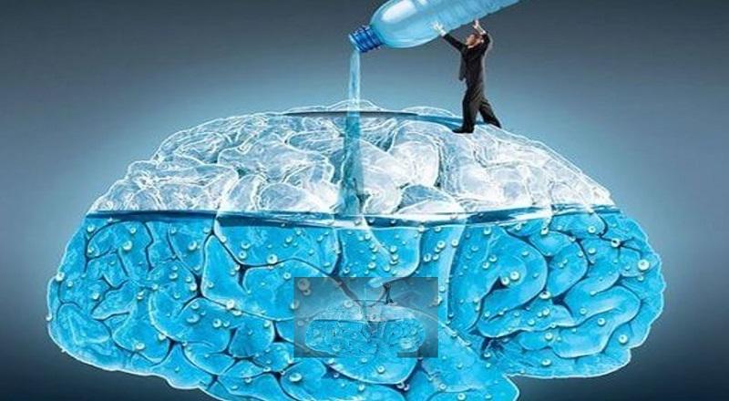 Мозг и вода